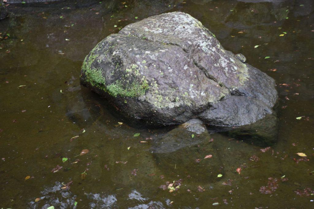 池の中の亀?